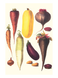 Eggplant, Nuts, and Tubers Posters by Philippe-Victoire Leveque de Vilmorin