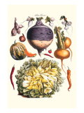 Vegetables; Peppers, Onion, Raddish, Tubers, Pumpkin, and Lettuce Art by Philippe-Victoire Leveque de Vilmorin