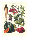 Vegetables; Strawberries, Beans, Tomato, Melon, and Raddish Prints by Philippe-Victoire Leveque de Vilmorin