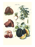 Vegetables; Potato, Melon, Raddish, Peas, Onions Posters by Philippe-Victoire Leveque de Vilmorin