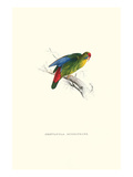 Red-Fronted Parakeet - Loriculus Philippinensis Kunst von Edward Lear