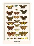 Butterflies Posters by Albertus Seba