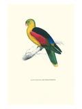 Crimson Winged Parakeet - Aprosmictus Erythropterus Posters by Edward Lear