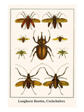 Longhorn Beetles, Cockchafers Poster by Albertus Seba