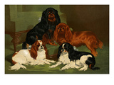 Toy Spaniels Print by Vero Shaw
