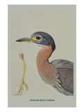 African Night Heron Posters by Louis Agassiz Fuertes