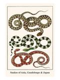 Snakes of Asia, Guadeloupe and Japan Kunst af Albertus Seba