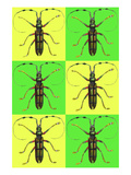Long Antennae Beetles Posters by Sara Pierce