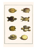 Three Keeled Land Tortoise, Star Tortoise, Green Turtles and Egg Posters by Albertus Seba