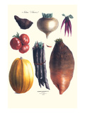 Vegetables; Tomato, Raddish, Sweet, Pumpkin, Carrots, Yam Prints by Philippe-Victoire Leveque de Vilmorin