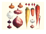 Onions Carrots and Turnips Prints by Philippe-Victoire Leveque de Vilmorin