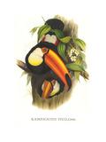 Toco Toucan Posters par John Gould