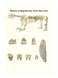 Skeleton of Megatherium, Fossil Bear Jaws Posters by James Parkinson