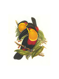 Ariel Toucan Photo by John Gould