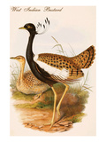 West Indian Bustard Posters by John Gould