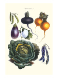 Vegetables; Eggplant, Beans, Cabbage, Turnips Print by Philippe-Victoire Leveque de Vilmorin