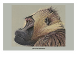 Gelada Baboon Poster by Louis Agassiz Fuertes