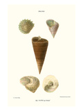 Top Shells Prints by John Mawe