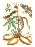 Moths and a Tree Boa Prints by Maria Sibylla Merian