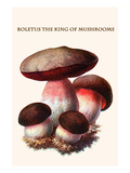 Boletus the King of Mushrooms Posters by Edmund Michael