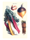 Vegetables; Rhubard, Carrot, Onion, Turnip Print by Philippe-Victoire Leveque de Vilmorin