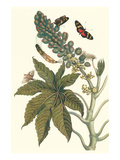 Castor Oil Tree with a Moth Print by Maria Sibylla Merian