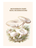 Mousseron Fairy Ring Mushroooms Print by Edmund Michael