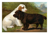 Field Spaniels Prints by Vero Shaw