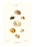 Hoof Shells Posters by John Mawe