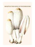 Boletus the King of Mushrooms Premium Giclee Print by Edmund Michael