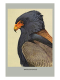 Bateleur Eagle Prints by Louis Agassiz Fuertes