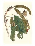 Ice Cream Bean Plant, Cloudless Sulphur Butterfly and Caterpillar with Moth on the Stalk Prints by Maria Sibylla Merian