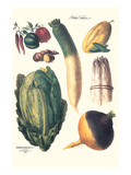 Vegetables; White Asparagus, Spago, Peppers, Cabbage, Turnip Print by Philippe-Victoire Leveque de Vilmorin