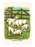 Woolly Sheep in the Pasture Posters by  Bird & Haumann