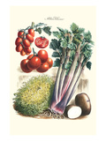 Vegetables; Tomato Varieties, Celery, and Potato Prints by Philippe-Victoire Leveque de Vilmorin