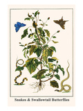 Snakes and Swallowtail Butterflies Prints by Albertus Seba