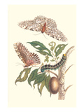 Limbo Tree with Owlet Moth Print by Maria Sibylla Merian