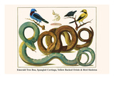 Emerald Tree Boa, Spangled Cortinga, Yellow Backed Oriole and Bird Skeleton Print by Albertus Seba
