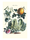 Vegetables; Melon, Lettuce, Green Beans, and Turnips Poster by Philippe-Victoire Leveque de Vilmorin