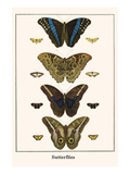 Butterflies Prints by Albertus Seba