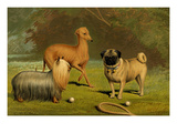Yorkshire Terrier, Italian Greyhound and Pug Prints by Vero Shaw
