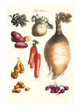 Vegetables; Onion, Potato, Carrot, Roots, Tubers Posters by Philippe-Victoire Leveque de Vilmorin