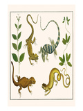 Lizards and Plants Prints by Albertus Seba