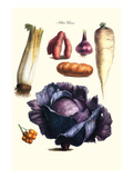 Vegetables; Cabbage, Celery, Yam, Potato, Onion, Tomato, Horse Raddish Prints by Philippe-Victoire Leveque de Vilmorin