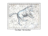 Ursa Major - the Great Bear Prints by Alexander Jamieson