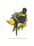 Hybrid Toucan Prints by John Gould