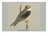 Black Shouldered Kite Affiches par Louis Agassiz Fuertes