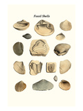 Fossil Shells Print by James Parkinson