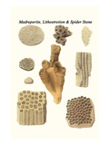Madreporite, Lithostrotion and Spider Stone Poster by James Parkinson