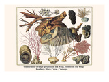 Cnidarians, Orange Gorgonian, Sea Whip, Violescent Sea Whip, Feathery Black Coral, Caulerpa Plakater af Albertus Seba